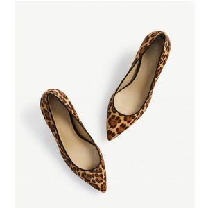 af79869ce909 Ann Taylor Shoes - Ann Taylor Reese Leopard Print Haircalf Pumps
